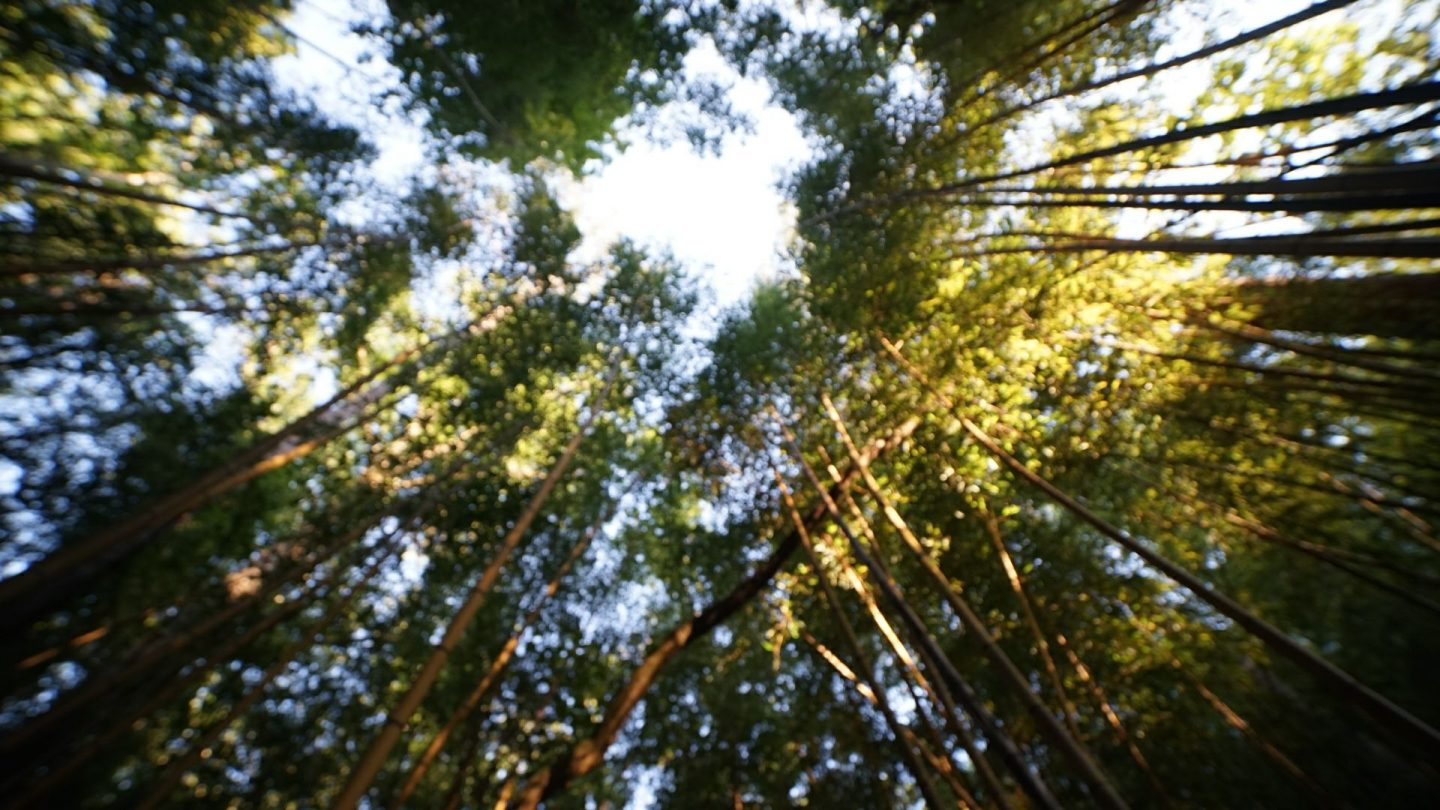 bamboo_forest_prattville1